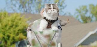 cat urine marking deterrent